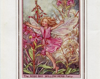 Rose-Bay Willow-Herb Flower Fairy Vintage Print, c.1950 Cicely Mary Barker Book Plate Illustration