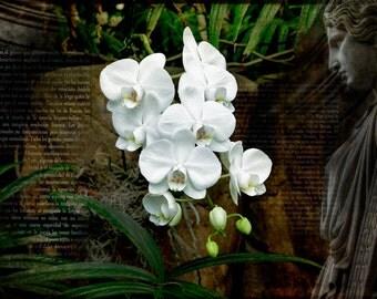 Flower Photography, Orchid  Art,  Fine Art Prints, White Orchid Photo, White Home Decor, Floral Decor,Flower Fine Art, Orchid Photo Art