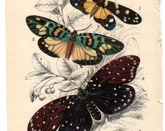 1896 Antique Butterfly Print  Natural History Lithograph Devanica Erasimia Amesia  Entomology Butterfly Art