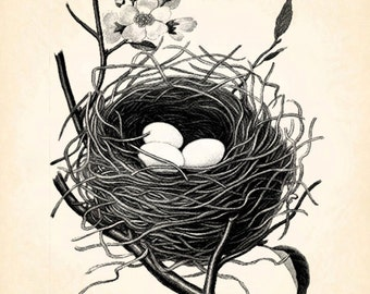 Birdnest Bird Nest Eggs Sping Vintage Printable Image INSTANT Download Digital Antique Clip Art Transfer Art Print jpg jpeg pdf png V30