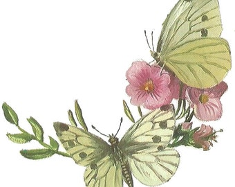 Temporary Tattoo Butterfly Vintage Book Illustration Pink and Yellow