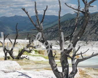 Mammoth Hot Springs professionally printed photo -- available in 5x7 or 8x10 (larger sizes by request) -- matte lustre finish