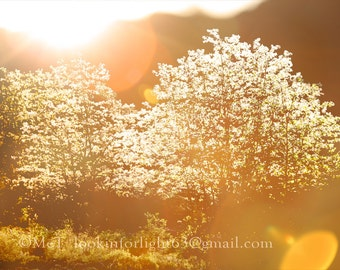 "Light Photo Art, Light and Trees Photo, golden Light, warm art, Dreamy Tree Photo. Instant Digital Download file, 1-Printable 5x7"" JPEG file"