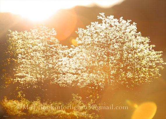 "Light Photo Art, Light and Trees Photo, golden Light, warm art, Dreamy Tree Photo. Instant Digital Download file, 1-Printable 5x7"" JPEG file"