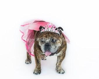 Princess English Bulldog Print, Fine Art Photography Print, Purrfect Pawtrait Pet Photography, Animal Photography