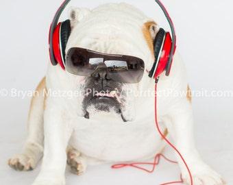 Beats English Bulldog Print, Fine Art Photography Print, Purrfect Pawtrait Pet Photography, Animal Photography