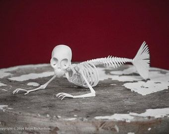 Fiji Mermaid Skeleton 3D Print Taxidermy