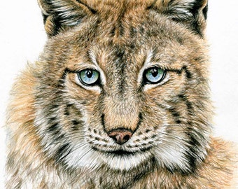 The Lynx - Fine Art Print 30x40 cm