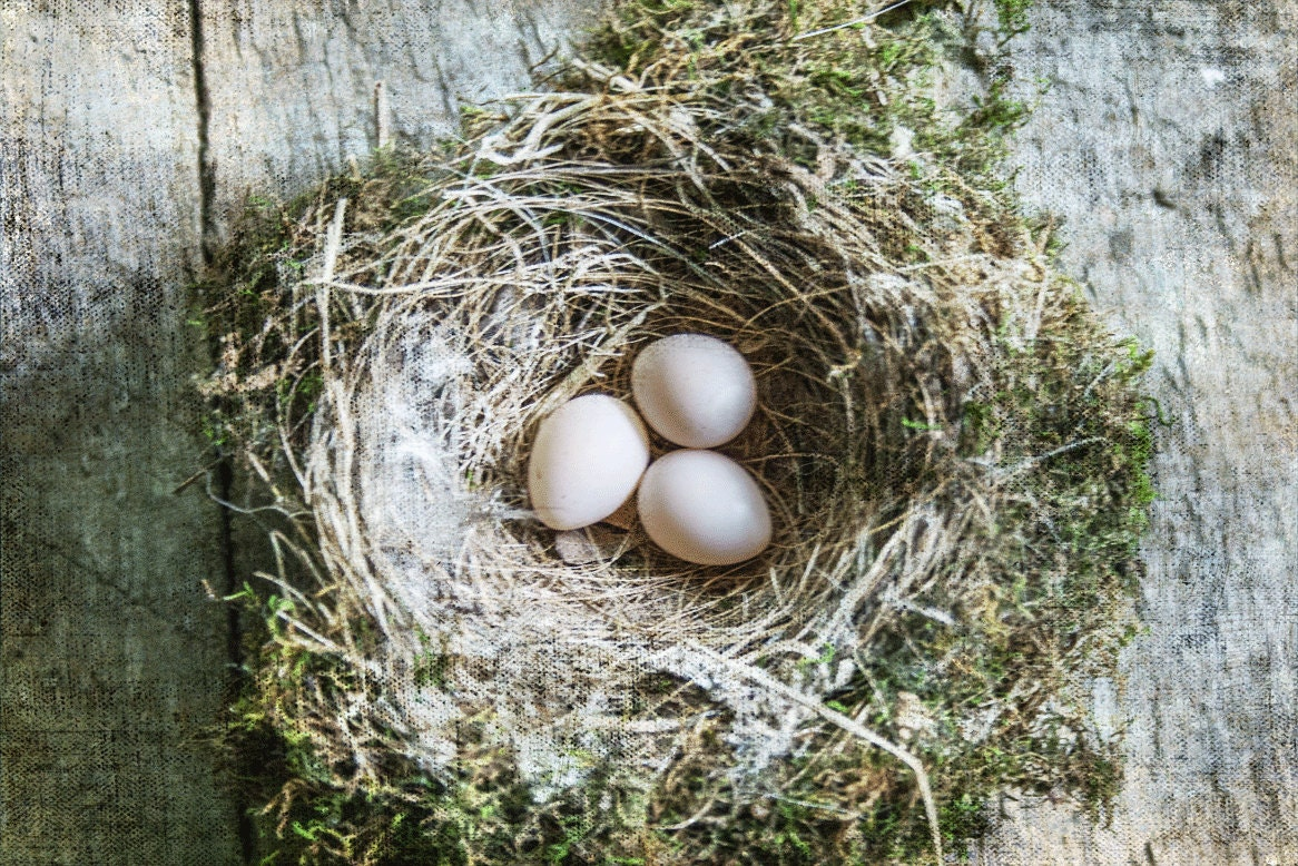 Bird 39 S Nest Rustic Home Decor Wall Art Fine By Theroostfineart