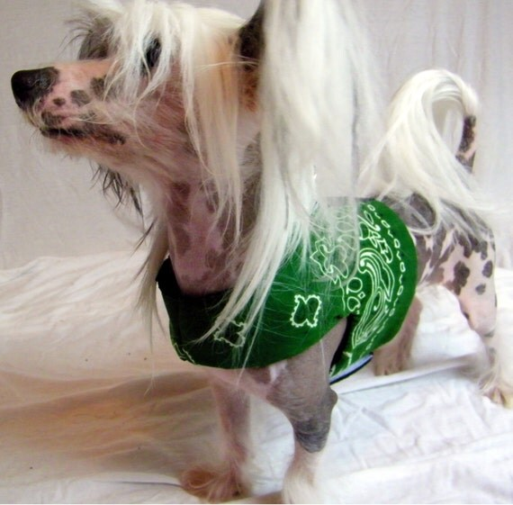 Pattern Harnesses w/Fleece Lining For Petite Dogs