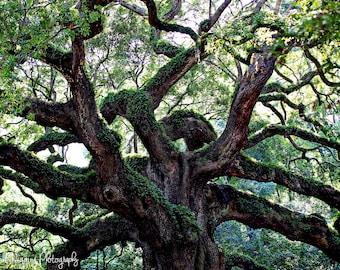 fine art photography print, nature photography, landscape wall art, home decor, office decor, Angel Oak tree