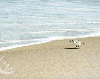 Nature and Bird Photography.  Beach, Sea, Ocean Photography. 8x12 Print