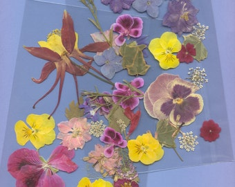 """Pressed flower packs, each with enough flowers to make a 5"""" x 7"""" arrangement."""