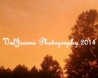 Nature Photography Evening Golden Sunset Amber Fine Art Photograph Print