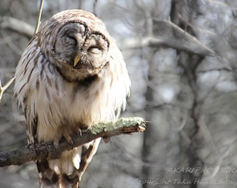 Nature Bird Photography : Barred Owl - Piney Orchard Nature Preserve, Maryland