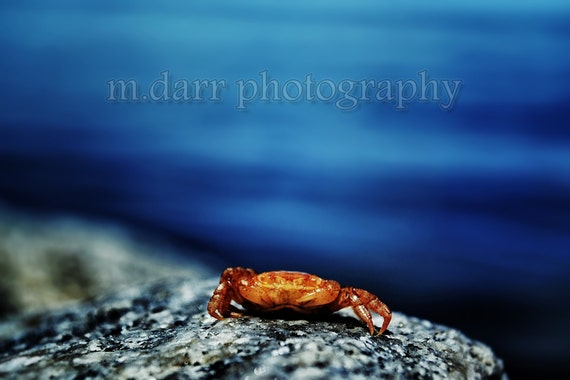 The Little Things, Crab, Ocean Life, Fine Art Print, Macro Photography