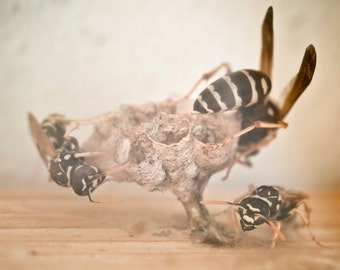 Insect Art: Wasp Photography for Natural History and Nature Lovers, Neutral Decor, Brown & Beige