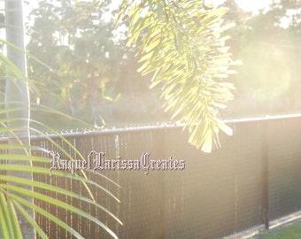 Bird and palm, Photography, sunlight, palms, giclee