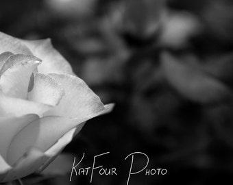 Photo Print, Black and White Rose Photo, Flower Photograph, Macro Photography, Home Decor, Nature Photography, Fine Art Print, Wall Art