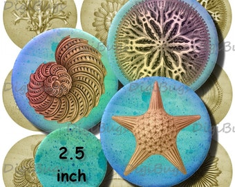 popular items for starfish sea shell on etsy Beach Shells Clip Art Pink Shell Clip Art