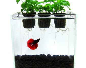 Popular items for aquaponics on etsy for Fish tank herb garden
