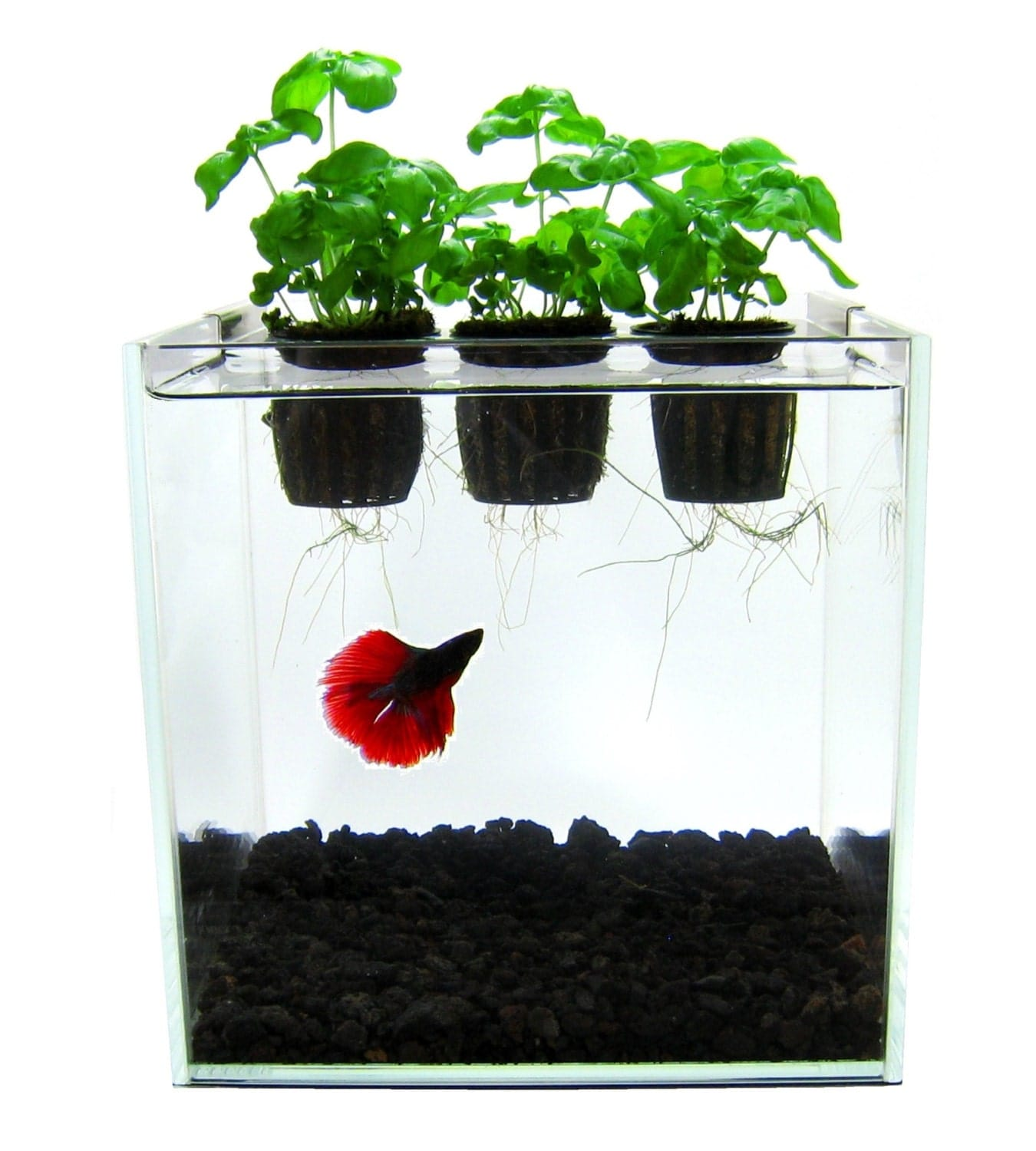 Self contained aquaponics kit betta fish aquarium herb garden for Fish tank herb garden