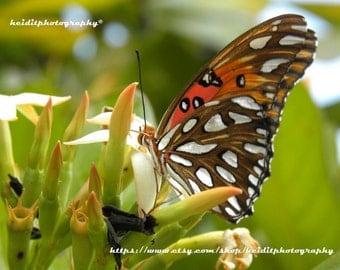 Monarch~ **Art**Paradise**Unedited**Wall Art* *Office Art**Photography**Print**  **Decor**Design**Photographic Art** *Butterfly*Monarch*Keys