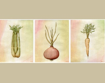 Celery, Onion, Carrot - Mirepoix Vegetable Trio - French Cuisine & Cafe Scientific Illustrations - Art Prints on Fine Art Paper