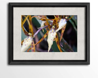 Orchids in the Monteverde Cloud Forest Reserve Print
