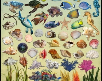 Seaside Dreams Digital Scrapbook Kit-PART 2