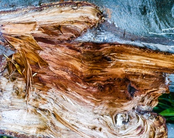 Natural abstract - eucalyptus bark #9