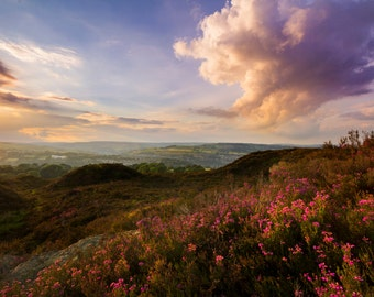 Heather sunset in Yorkshire Fine Art photography, Landscape, image download, Home decor, Instant Download, Jpeg.