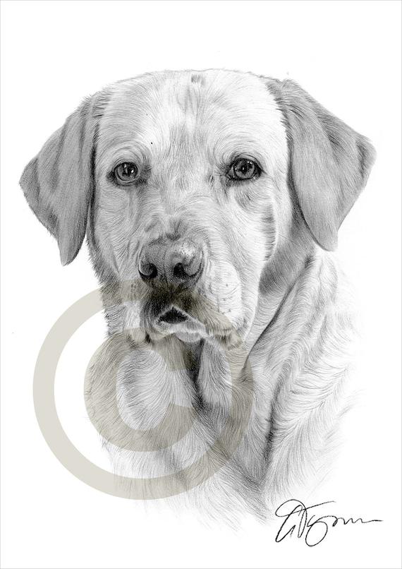 Crayon de labrador retriever chien dessin imprimer oeuvre - Dessin golden retriever ...