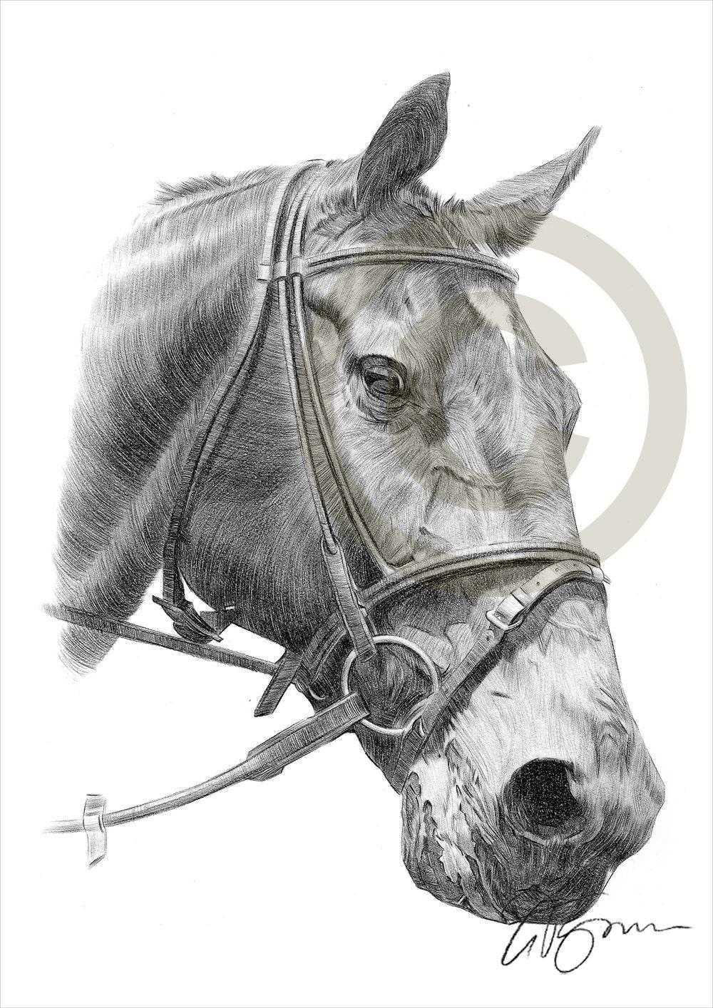 Matita cavallo disegno opera di formato a4 stampa firmata for Disegni di cavalli a matita