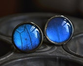 Real Butterfly Wing Ring Blue Morpho Adjustable in Silver or Antique Bronze