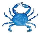 Blue Crab Print From Original Watercolor, Chesapeake Bay Blue Crab Wall Art Print, Maryland Blue Crab Home Decor Wall Art Print, Coastal Art