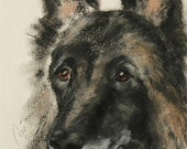 Belgian Tervuren Dog Art Belgian Shepherd Original Pastel Drawing By Cori Solomon