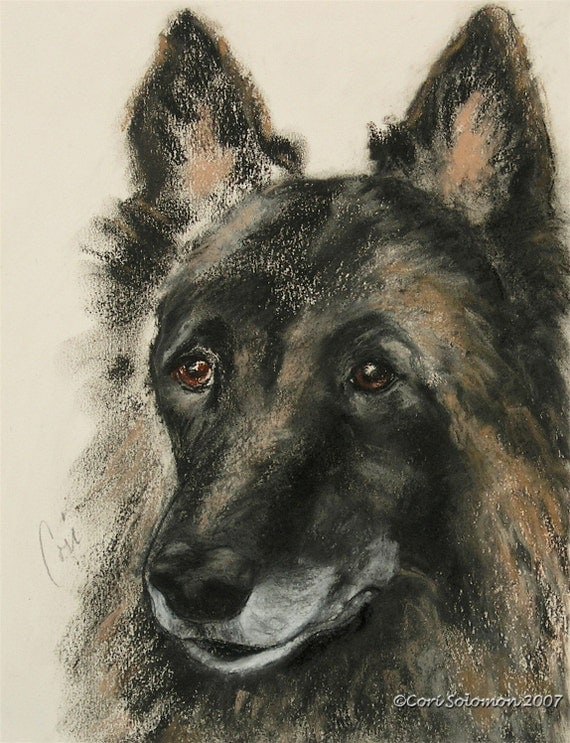 Belgian Tervuren Dog Art Belgian Shepherd Original Pastel Drawing By Cori Solomon