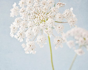 Queen Annes Lace photo, pale blue botanical print, nature photography, wildflower photo, shabby chic decor, floral wall art - White Lace