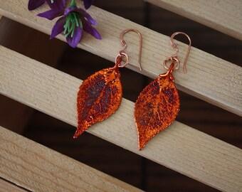 Copper Leaf Earrings Evergreen, Evergreen Leaf, Real Leaf Earrings, Copper, Nature, LESM36