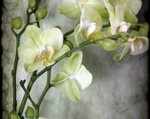 Orchid still life nature photography Spring Easter home decor office decor nursery decor