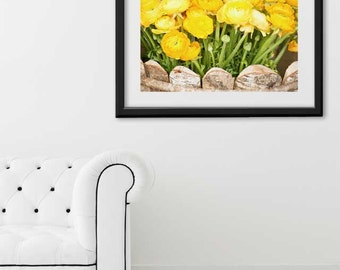 "Paris Print, ""Yellow Ranunculus"" Extra Large Wall Art, Paris Photography Art Print, Oversized Art, Fine Art Photography Paris Decor"