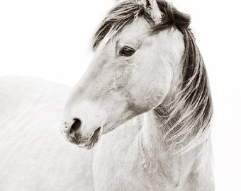 Wild Horse Photography, Wild Horse on Carrot Island Portrait, Black and white horse photography