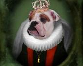 English Bulldog Art Bulldog Animal Photography Dog Print Pet Portrait Home Decor Gift for Dog Lover Pet Lover 8x10 Print - Lucy Bulldog