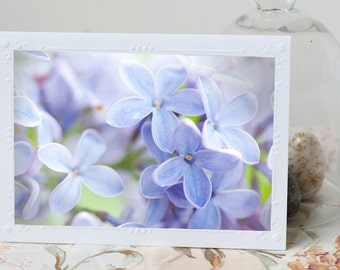 Lilac Photo Notecard - Blue Lilac Blossom Note Card, Stationery, Floral Photo Notecard, Blank Notecard