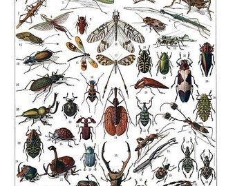 antique french illustration insects learning board digital download