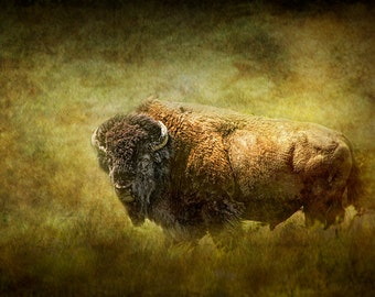 Great Plains American Buffalo or Bison is a Native American Sacred Spiritual Animal No.2802OL A Fine Art Animal Nature Landscape Photograph