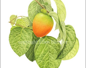 Persimmon Ripening, Small Giclee Print