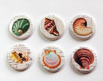 Seashell Magnets, Nature Magnets, button magnets, Kitchen Magnets, beach decor, beach wedding favor, Fridge Magnets, magnet set (3250)