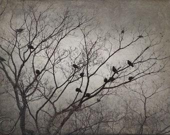Blackbird Flock, Blackbird Print, Flying Blackbirds, Flock of Blackbirds, Surreal Blackbirds, Bird Flock, Black Birds
